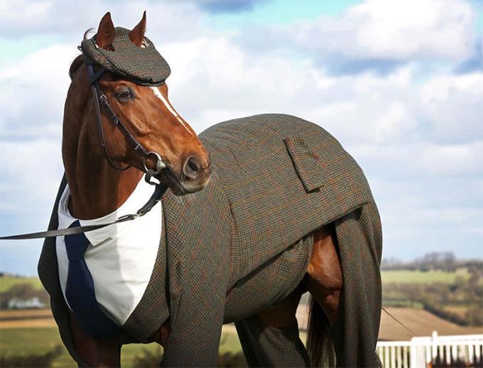 Gentleman-Horse