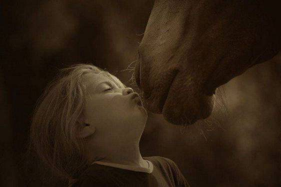 horse_chdc