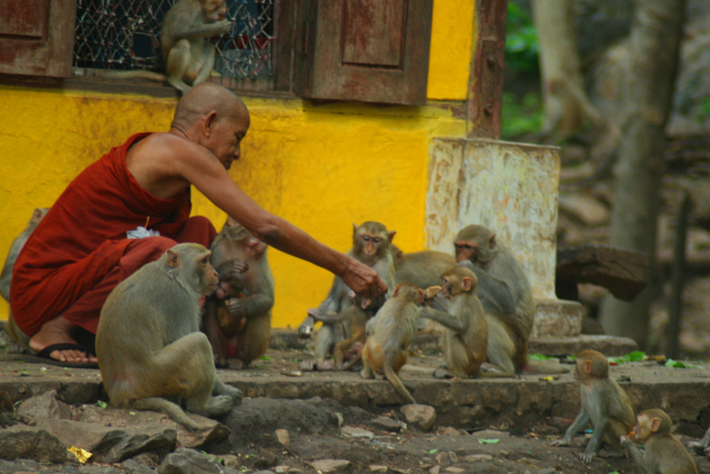 monk-feeding-monkeys